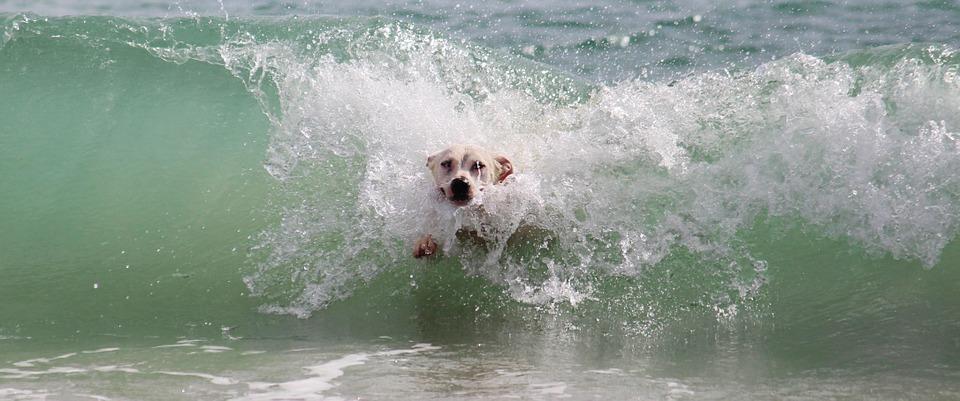 beachdog1