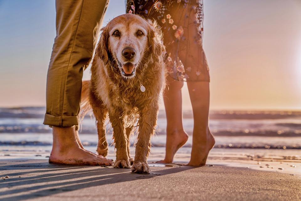 beachdog2